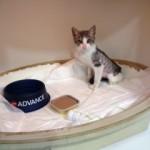 Odeix: Hernia diafragmática de un gatito.