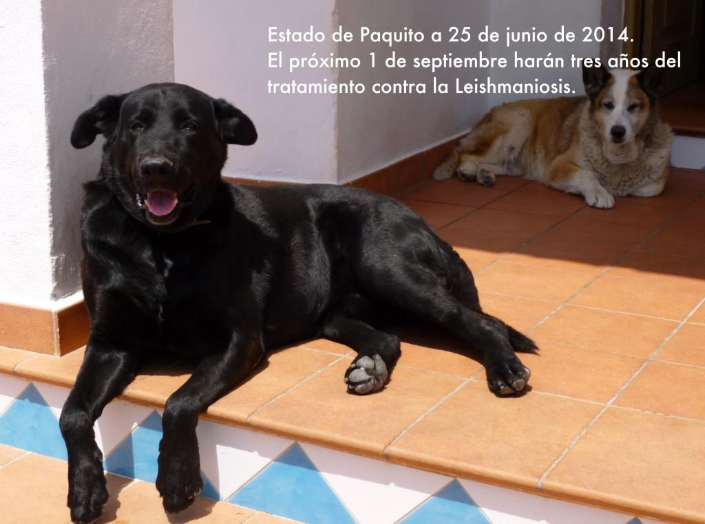 Paquito--.25-6-14 (2)