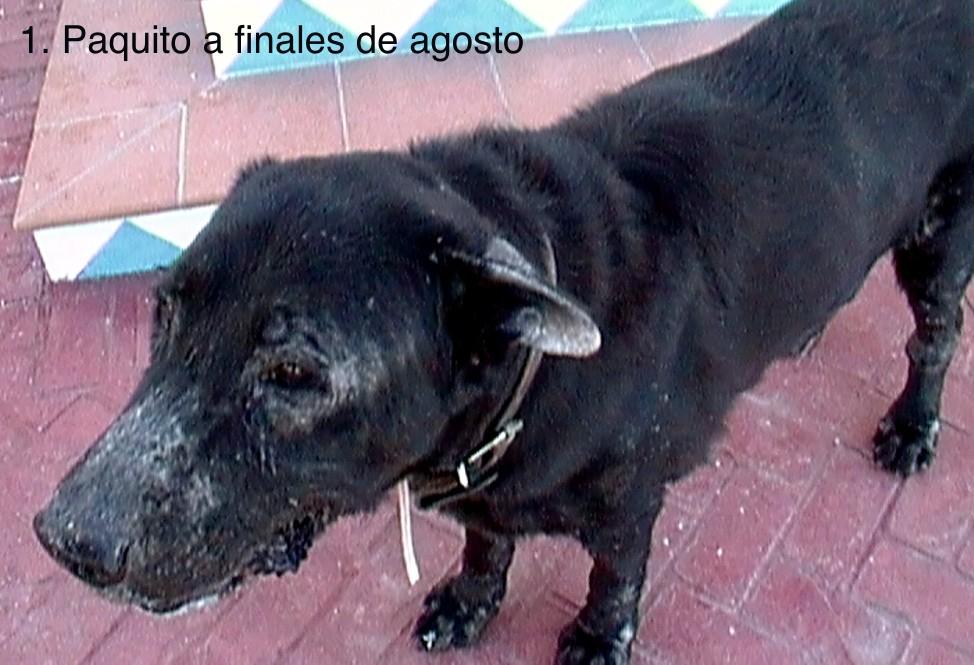 Paquito1-OCT-2011