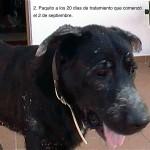 Paquito3-OCT-2011