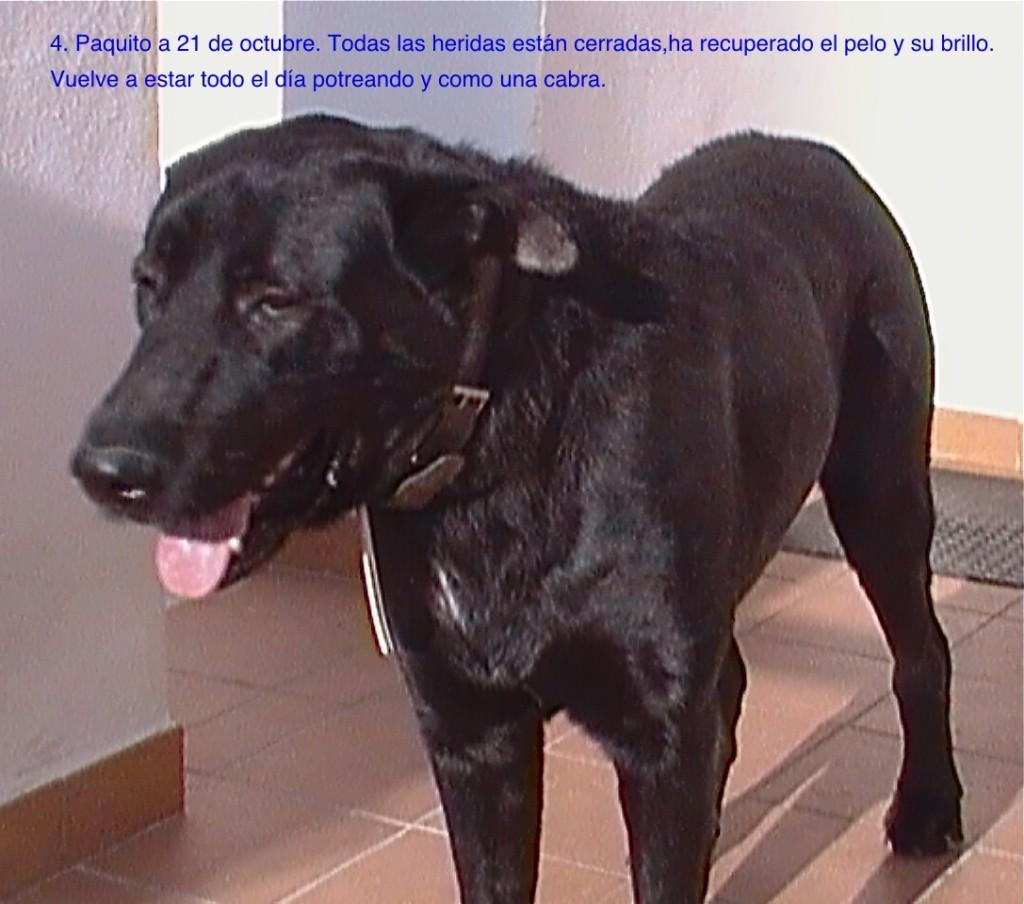 Paquito6-OCT-2011